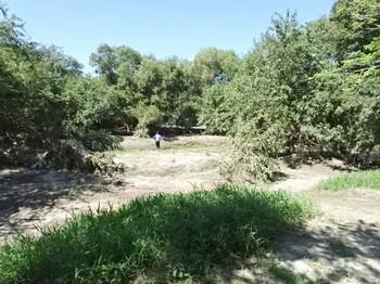 川に近い部分は草が無い