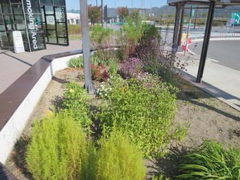 梓川SAの駐輪場前の花壇