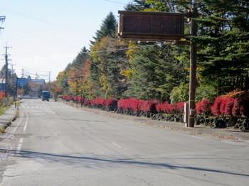 碓氷峠近くの紅葉の植え込み