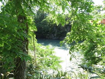 新緑の天竜川