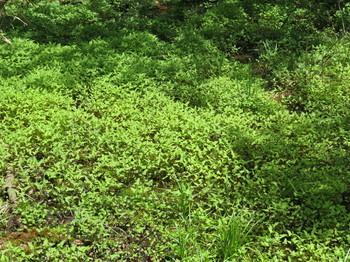 湿地状の草むら