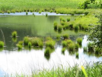 最深部の池