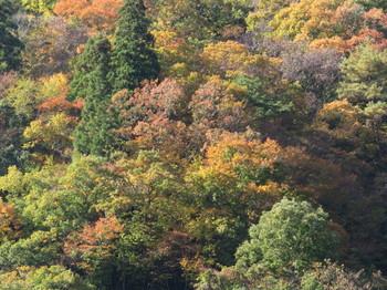 山肌の木々