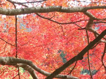 室生寺門付近で撮影