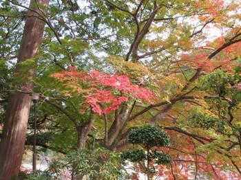 室生寺門前付近で撮影