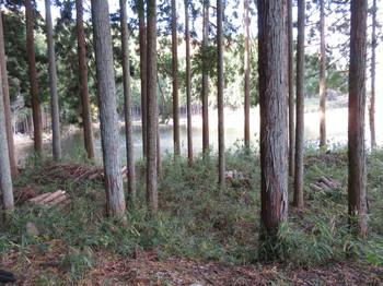 林に囲まれている