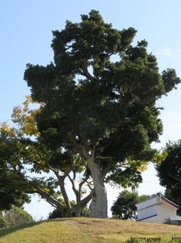 リゾートタウンの木