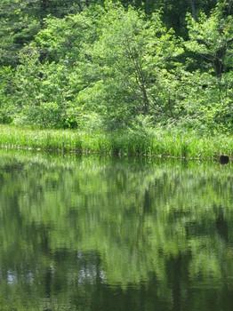 戸隠森林植物園のみどりが池
