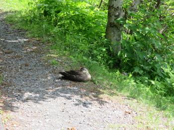 戸隠森林植物園のみどりが池に居た水鳥