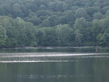 鏡池の湖面