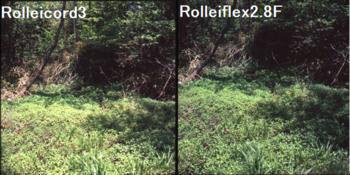 草木の写り具合はほぼ変わらない